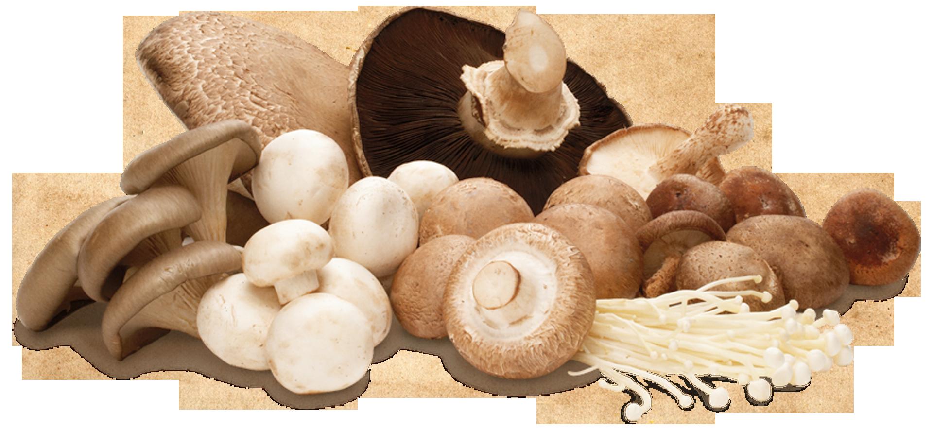 cogumelo-topo